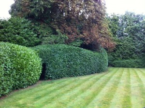 Hedge Cutting Farnham