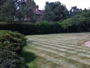 Lawn care Farnham